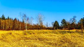 Cores da queda em Campbell Valley Regional Park no distrito de Langley Foto de Stock