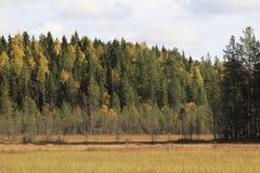 Cores da queda Floresta distante na luz do sol imagens de stock royalty free