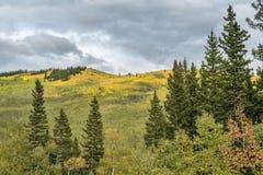 Cores da queda na passagem de Kenosha em Colorado fotografia de stock