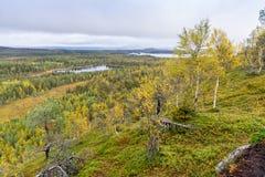 Cores da queda - tempo do ruska em Lapland Fotografia de Stock Royalty Free