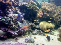 Cores da vida marinha fotografia de stock royalty free