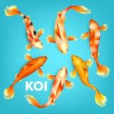Cores diferentes de Koi Exotic Fish Set Vetora ilustração royalty free