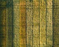 Cores diferentes em uma cultura experimental do trigo imagens de stock