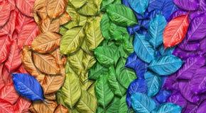 Cores do arco-íris Fundo caído colorido da textura das folhas de outono Teste padrão abstrato das folhas brilhantes imagens de stock