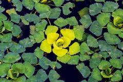 Cores do inclinação nas plantas Fotografia de Stock Royalty Free