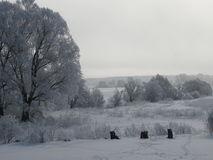 Cores do inverno Fotografia de Stock