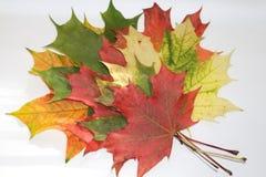 Cores 9 do outono Imagem de Stock