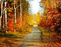 Cores do outono Fotografia de Stock