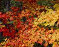 Cores do outono foto de stock royalty free