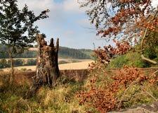 Cores do outono Foto de Stock