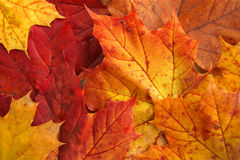 Cores do outono Fotos de Stock Royalty Free