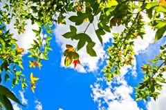 Cores 9 do outono Fotografia de Stock