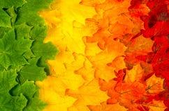 Cores 9 do outono Foto de Stock