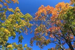 Cores do outono Imagem de Stock