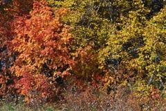 Cores do outono Fotografia de Stock Royalty Free