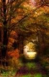 Cores do outono. Imagem de Stock Royalty Free