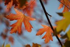 Cores 9 do outono foto de stock royalty free