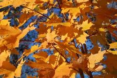 Cores do outono Fotos de Stock