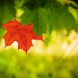 Cores 9 do outono Fotos de Stock Royalty Free