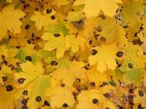 Cores 9 do outono Fotos de Stock