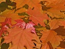 Cores 9 do outono Fotografia de Stock Royalty Free