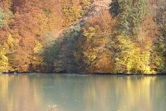 Cores do outono - como núcleos faça outono fotografia de stock