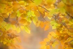 Cores do outono da floresta Fotos de Stock Royalty Free