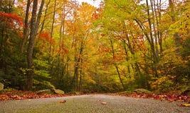 Cores do outono da queda Fotos de Stock