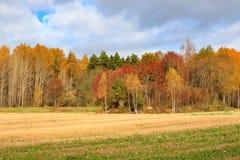 Cores do outono das árvores do campo da paisagem Fotografia de Stock
