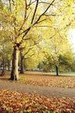 Cores do outono de Londres Fotografia de Stock Royalty Free