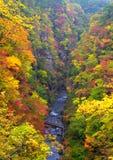 Cores do outono do Naruko-Desfiladeiro fotos de stock