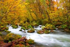 Cores do outono do rio de Oirase imagens de stock royalty free
