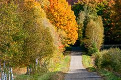 Cores do outono em Canadá fotos de stock