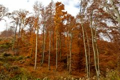 Cores do outono na floresta fotografia de stock royalty free