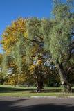 Cores do outono nas árvores ao longo da rua Foto de Stock