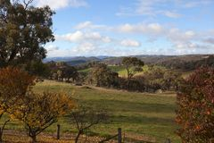 Cores do outono no campo. NSW. Austrália. Imagens de Stock