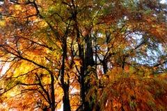 Cores do outono no parque público de Milão Fotos de Stock