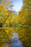 Cores do outono refletidas em um córrego imagem de stock
