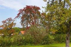 Cores do verão de Autumn September Indian das folhas e das árvores em um b Fotos de Stock