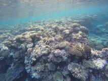 Cores dos recifes de corais fotos de stock