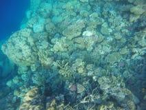 Cores dos recifes de corais fotografia de stock royalty free