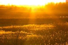 Cores douradas do sol da noite fotos de stock royalty free