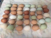 Cores e tamanhos do ovo fotos de stock royalty free