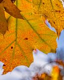 Cores e texturas brilhantes do outono Fotografia de Stock