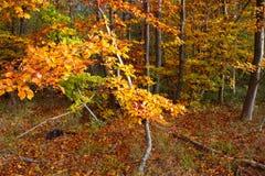 Cores misturadas na floresta foto de stock royalty free