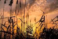 Cores quentes e mornas e máscaras de paisagens bonitas de Rússia na região de Rostov Campos locais de girassóis amarelos de flore imagem de stock royalty free