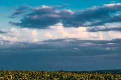 Cores quentes e mornas e máscaras de paisagens bonitas de Rússia na região de Rostov Campos locais de girassóis amarelos de flore fotos de stock