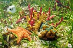 Cores subaquáticas lindos Imagem de Stock