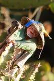 Cores velhas de madeira do brinquedo com boneca fotos de stock royalty free