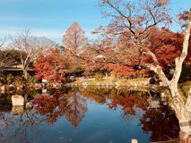 Cores vermelhas de folhas de outono imagens de stock